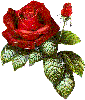 Роза аватар